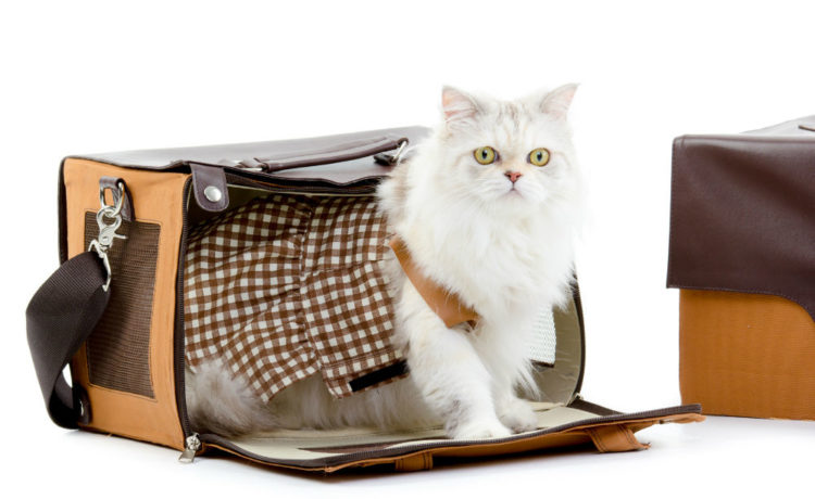 A Guide to Finding the Perfect Cat Carrier
