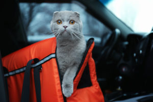 Choosing the Perfectly Sized Cat Carrier