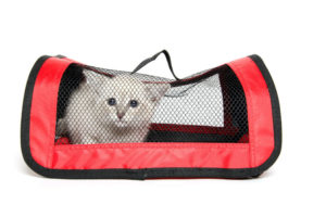 Useful Techniques to Get a Cat Inside a Carrier
